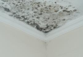 ceiling mold damage